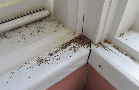 Why Termite Infestation Often Are Discovered During Spring Season