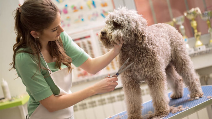 Caring Tips You Should Follow For Your Pet